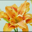 Lilly Love by Bea Godbee