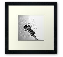 Blowball Framed Print