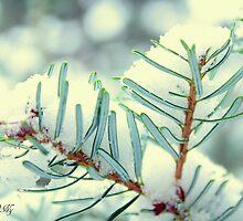 Winter pine by aMOONy