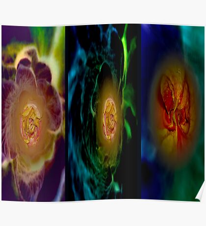 Part of a rose.Triptych Screen Poster