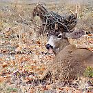 A Bad Antler Day by Diane Schuster