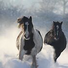 Dashing through the snow by Pauline-W