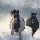 Dashing through the snow by Pauline-W