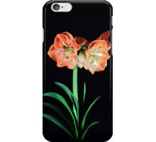 Amaryllis Amore iPhone Case/Skin