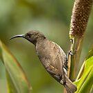 Sunbird by Paulo van Breugel