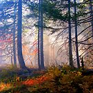 Autumn Fire And Mist by Diane Schuster
