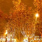 snow + lights + trees = festive Christmas impression  by bubblehex08