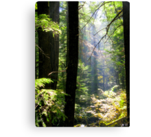 Dramatic Forest Canvas Print