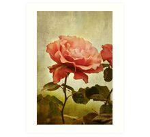 Rainy Day Rose... Art Print