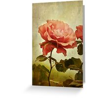 Rainy Day Rose... Greeting Card