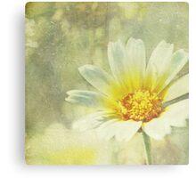 Vintage Daisy Canvas Print