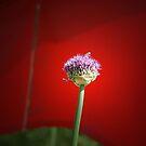 Purple Flower by Michael  Herrfurth