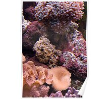 Reef Tank Corals Poster