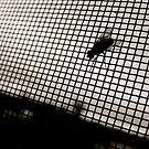 silhouette of a fly  by trinitywilson