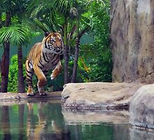 Tiger In Action by JaninesWorld