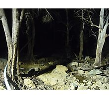 Creepy trees Photographic Print