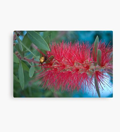 Red Brush Flower Canvas Print
