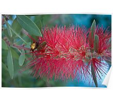 Red Brush Flower Poster