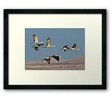 1218101 Sandhill Cranes Framed Print