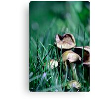 Fairy's World 1 Canvas Print