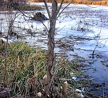 Beaver and Muskrat Hometown by Carla Wick/Jandelle Petters