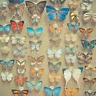 The Butterfly Collection II by Cassia