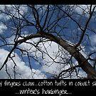 Winter Haiku by Cathy O. Lewis