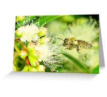in search of nectar Greeting Card