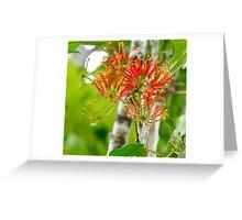 Flowering Queensland Firewheel Tree  Greeting Card