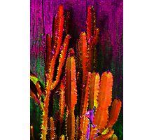Somebody's Cactus Photographic Print