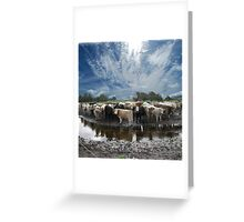 Steers and Clouds Greeting Card