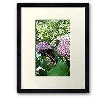 Giant Swallowtail Butterfly in profile Framed Print