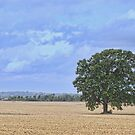 It Stands Alone! by barnsis