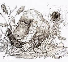 Platypus in nest by John Segond