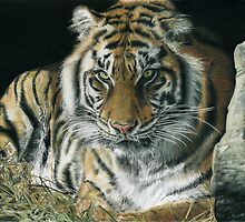 Year of the tiger by Sam Norbury & Rodeorose by Samantha Norbury
