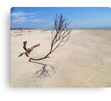 Small Tree on Deserted Beach Canvas Print