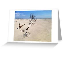Small Tree on Deserted Beach Greeting Card