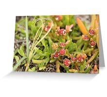Carpobrotus rossii, the fruit Greeting Card