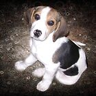 Puppy Beagle by Jazz08
