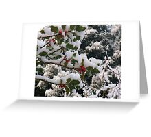 Holly in the Snow Greeting Card