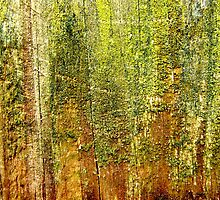 Forest by Kathie Nichols