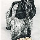 English Cocker Spaniel by Charlotte Yealey