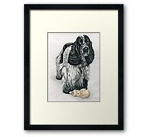English Cocker Spaniel Framed Print
