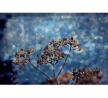 Seasons Greeting Photographic Print