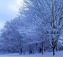 Snow Beauty #2 by trish725