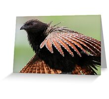 ''Pheasant Coucal'' Greeting Card