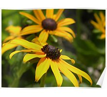 Black Eyed Susans: Ocean City Maryland Poster