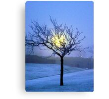 Tree in snow  Canvas Print