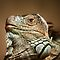 (Amphibians & Reptiles Category) - Any Amphibian or Reptile