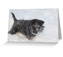 I am a Patterdale Greeting Card
